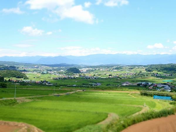 noon farm (ヌーンファーム)|長野県飯綱町のりんご農園